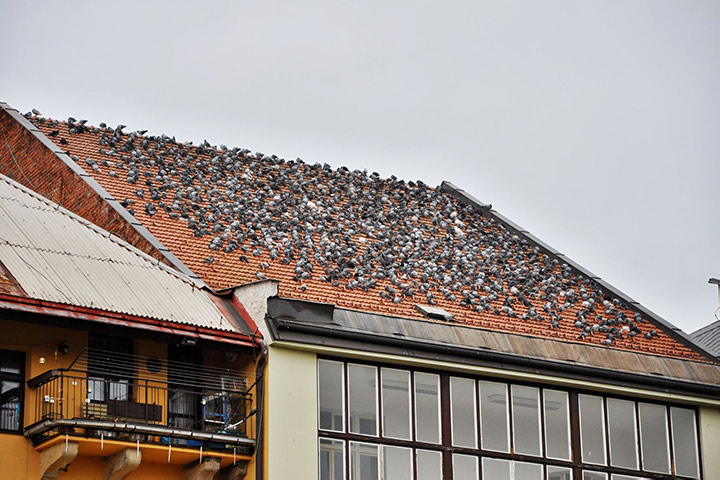 A2B Pest Control are able to install spikes to deter birds from roofs in Kings Cross.