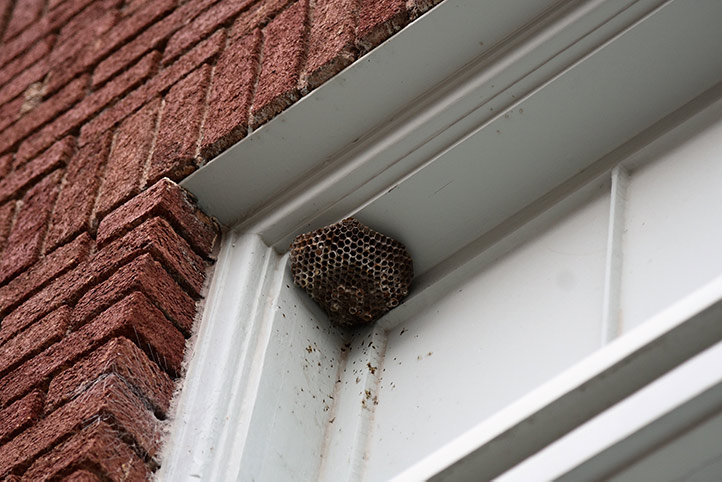 We provide a wasp nest removal service for domestic and commercial properties in Kings Cross.